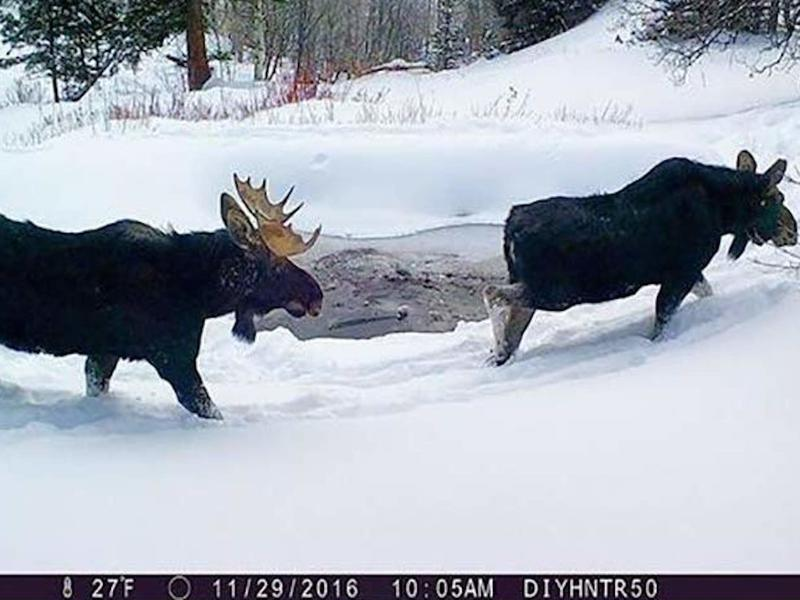 browning-trail-camera-lifestyle