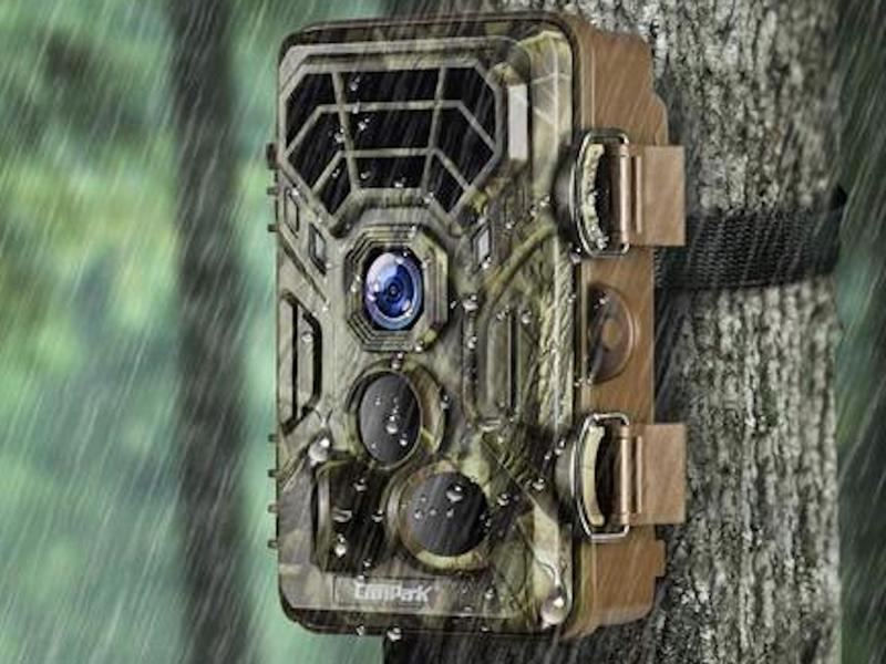See everything lurking in the woods with one of these trail cameras