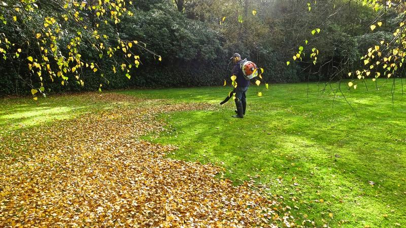 photo of A large garden can be a curse if not for the backpack leaf blowers image