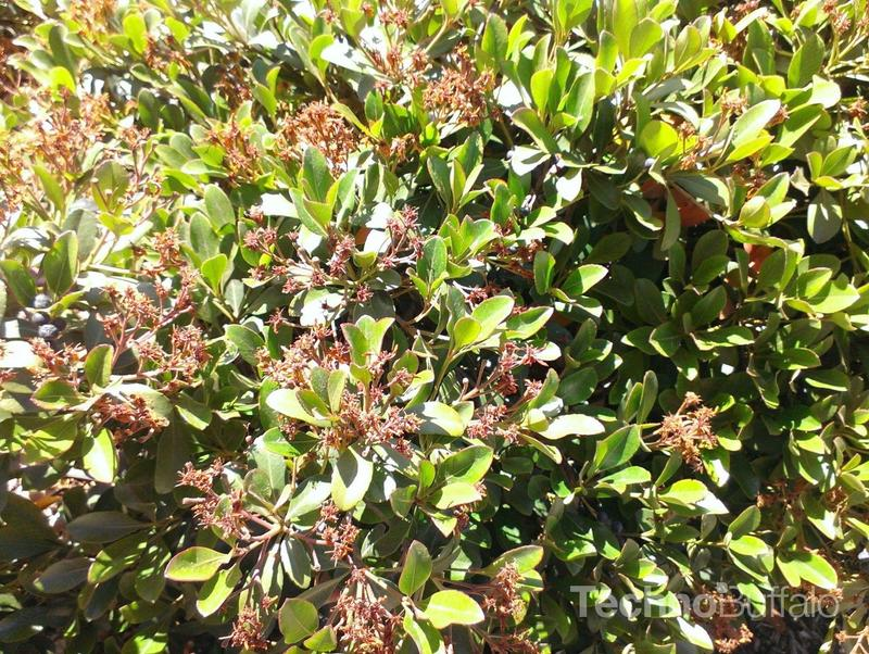 HTC First Review - Camera - Sample Photo - 005