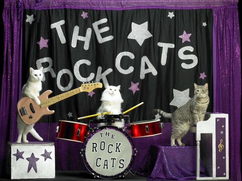 new-rockcats-cropped