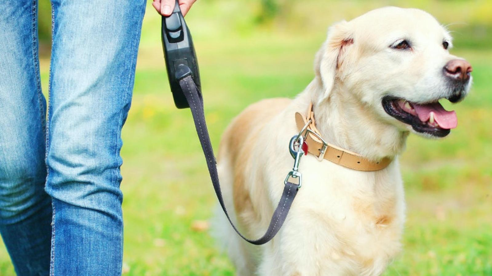 retractable dog leashes hero image