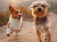 Get to know your furry best friend with a handy DNA kit