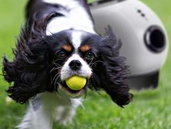 Let Fido play with one of these automatic ball launchers
