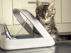 Best automatic pet feeders for your furry friends
