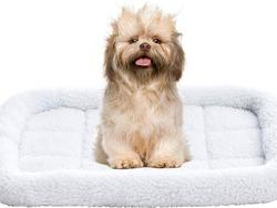 Pamper your dog with the best beds