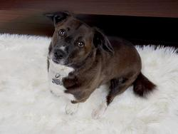 Tuck Fido into one of these comfy dog beds
