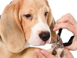 Your best friend's nails need to be cut with the right trimmers