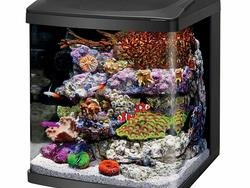 Build your own water paradise with a quality aquarium