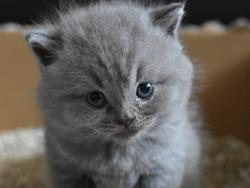 Keep your cat happy with the best cat litter