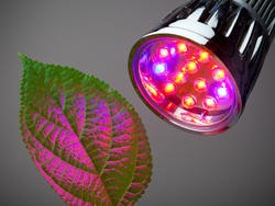 Illuminate your garden year-round with these grow lights