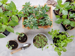 Clear your windowsills and get ready for this year's best herb garden kits