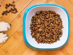 Choose the best dog food for your special pet