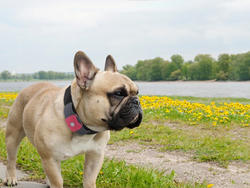 Tagg Pet Tracker GPS Keeps Fido in Your Sights at All Times