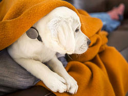 Give Fido His Own FitBit With Whistle