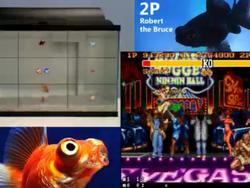 Two Fish Are Playing Street Fighter on Twitch Because I Don't Know