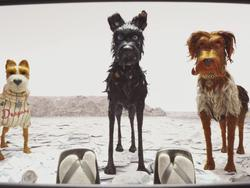 Best Movies of 2018: Isle of Dogs