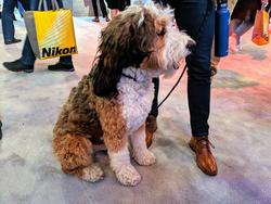 The Dogs of CES 2019