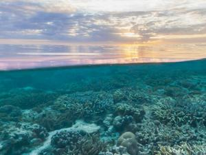 Google's Street View Goes Scuba Diving, Explores the Great Barrier Reef