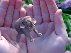 Google-backed Magic Leap breaks ground on new campus
