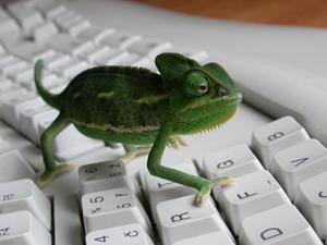 English Police Arrest Alleged Lizard Squad Member