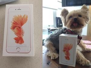 iPhone 6s in Rose Gold delivered early to one lucky customer