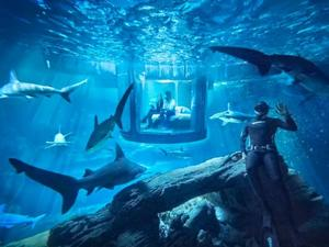 Sleep in an underwater Shark Aquarium if you win this Airbnb contest