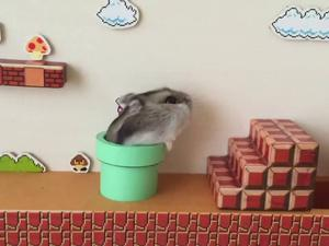 Super Mario Bros. level run by hamster, obviously