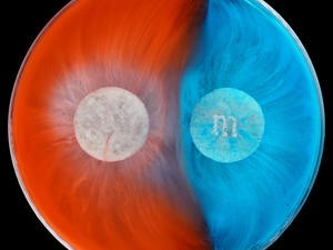 Watch these M&Ms dissolve in hypnotizing timelapse