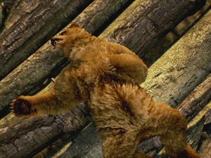 Two bear-naked brawlers go at it like animals in new Tekken 7 video