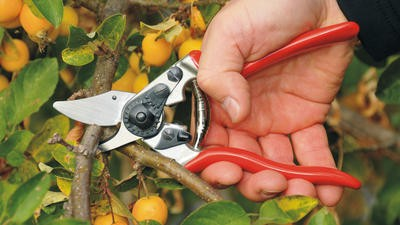 Maintaining your garden is easier with these pruning shears