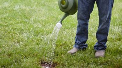 Get a lush lawn with these grass seeds